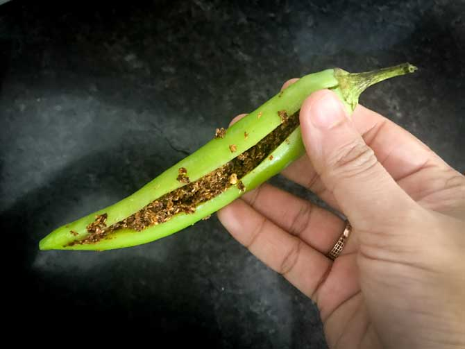 Green chilli stuffed with Achari masala